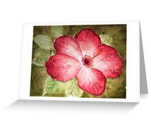Pretty Hibiscus  Greeting Card