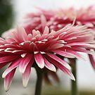 """Pink Blush"" by chloemay"
