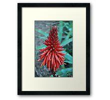 Hello Aloe Framed Print