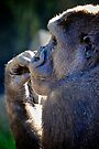 Contemplative Gorilla by Renee Hubbard Fine Art Photography