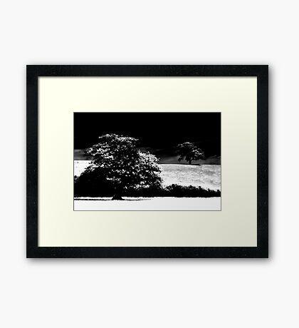 Age Old Oak Framed Print