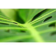 Green n Beautiful Photographic Print