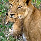 Lioness re-locate cub by Corien