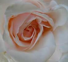 Peach Cobbler Rose by MarianBendeth