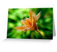 Peach Colored Flower Greeting Card