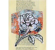 ROSE CUBE Photographic Print