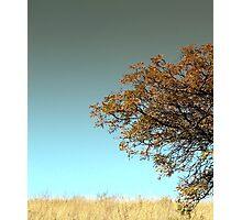 Singing Bird Photographic Print
