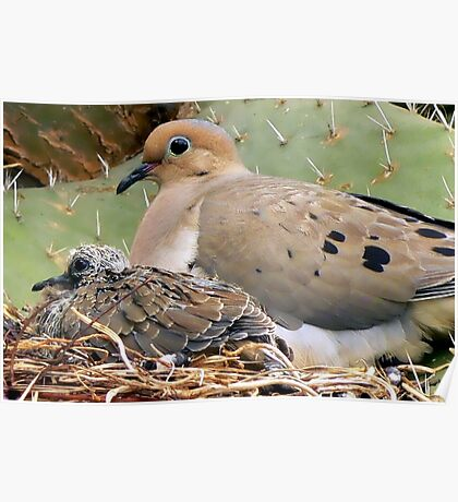 Mourning Doves: Thorn Baby and Proud Mother Poster