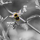 Buzzing by Dave Godden