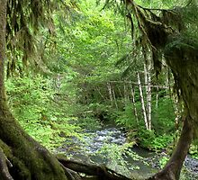 Through the Moss Covered Trees by Lucinda Walter