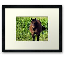 """Horses with Attitude no. 3, ""You Wanna Piece of This?'""... prints and products Framed Print"