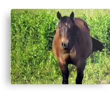 """Horses with Attitude no. 3, ""You Wanna Piece of This?'""... prints and products Metal Print"