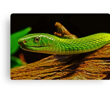 Green Mamba Canvas Print