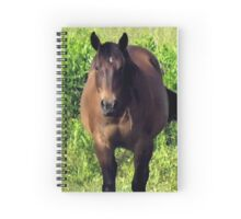 """""""Horses with Attitude no. 3, """"You Wanna Piece of This?'""""... prints and products Spiral Notebook"""