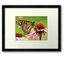 Beauty and the Blossoms Framed Print