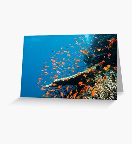 Red Sea Greeting Card
