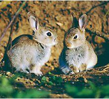 Baby rabbits  Photographic Print