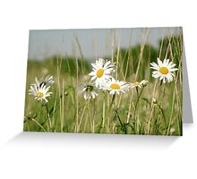 Daisies in field  Greeting Card