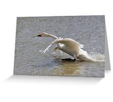 Bewick walks on water Greeting Card