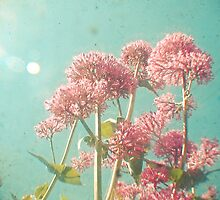 Pink Milkweed by Cassia