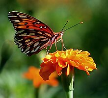 Butterfly Kisses by Paulette1021