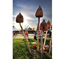 Wooden Mushrooms Photographic Print