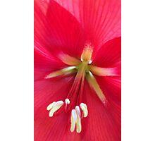 Spring Palette Photographic Print