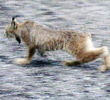 Cat Walk by copperhead