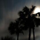 Tropical moonlight by BillH