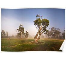 Midlands Eucalypts Poster