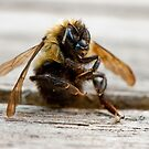 Bee cool by Sylvain Dumas