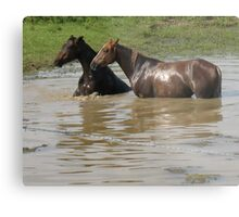 """Horses with Attitude no. 6,  ""Ya Gettin' On My Last Nerve!'""... prints and products Metal Print"