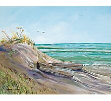 Driftwood on the Dune Photographic Print