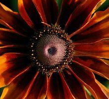 Autumn Flower by Amy Godwin