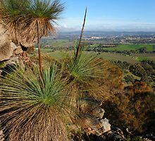 Mt Barker Summit  by Briony  Williams Photography