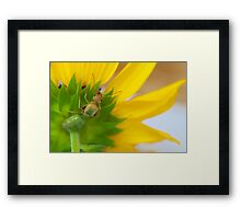 Study of Green Ant #4 Framed Print