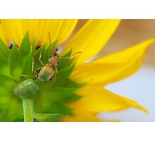 Study of Green Ant #4 Photographic Print