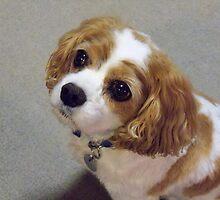 Daisy, close-up by Nanagahma