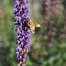 The busy bee has no time for sorrow. by Kirsten Moody