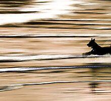 See Spot...See Spot run...Run Spot run...Stupid Dog by AndyGii