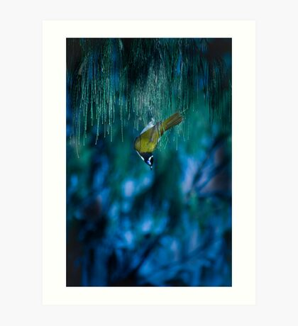 blue eyed bird Art Print