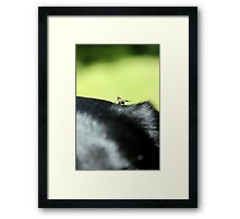 Horse ate the Lab Framed Print