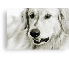Good Dog Canvas Print