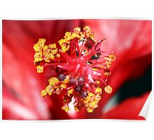 The macro of a hibiscus. Poster