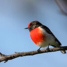 Red-capped Robin ... blue skies by Kerryn Ryan, Mosaic Avenues