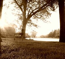Summer Afternoon by shutterbugg73