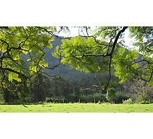 The Last Rays of the Sun Shining through the Jacaranda Tree Leaves. Photographic Print