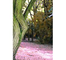 Limbs Photographic Print