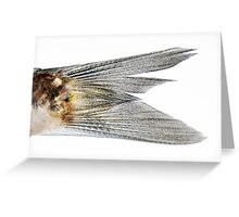 macro shot of a fish tail on a white background Greeting Card