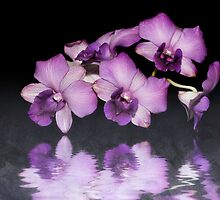 Purple Orchid by CPAULFELL